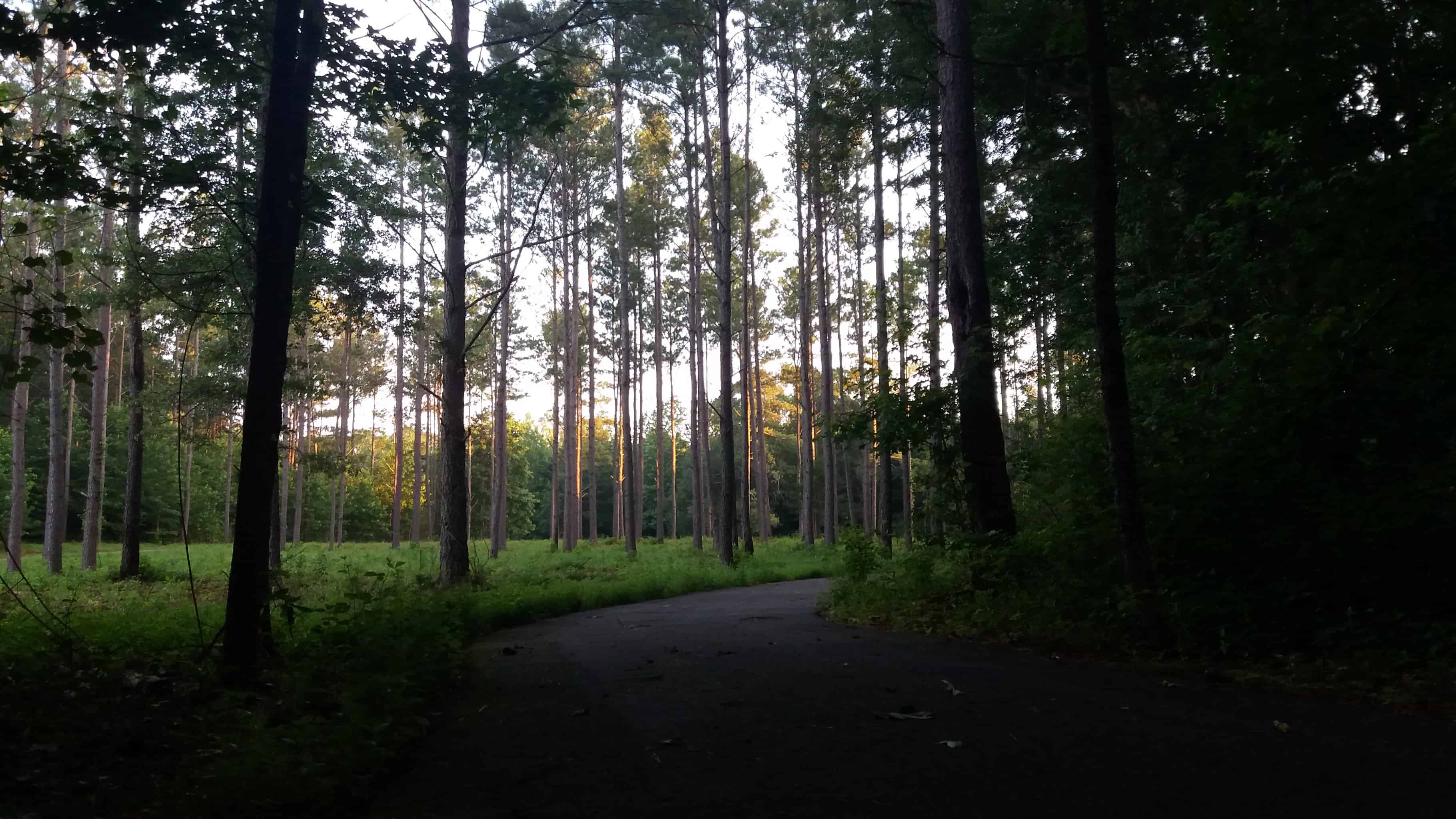 Little Tallapoosa Park, just after sunrise. Not scary (anymore).